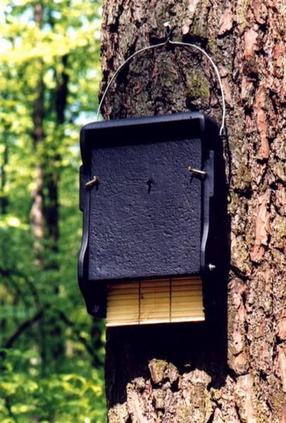 Fledermausflachkasten 1 FF mit eingebauter Holzrückwand