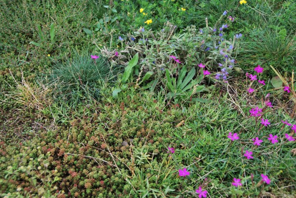 R&W Blütenwiese mit Saathilfe