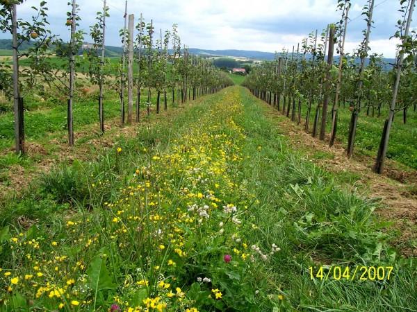 Reb- und Obstzeilen-Mischung - heimisches Saatgut autochthon