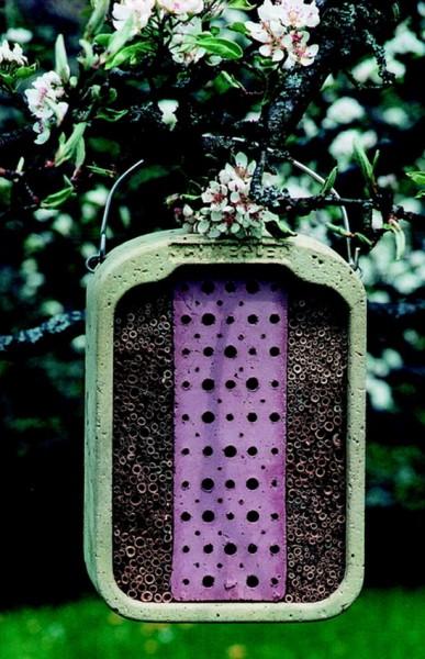 Insektennistwand